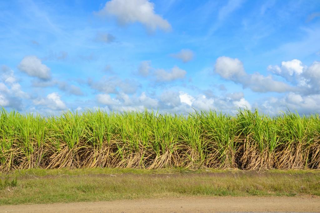 Cuba exporta azúcar, tabaco laminado, níquel y derivados del petróleo / Foto: Pixabay