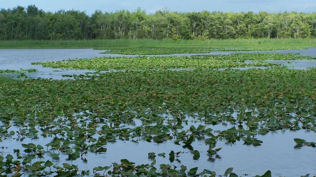Multan a Nicaragua con 379.000 dólares que deberá pagar a Costa Rica por daño ambiental / Foto: Pxhere