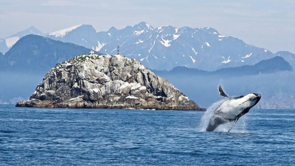 La historia de esta empresa está muy ligada a los balleneros vascos que fueron a Terranova / Foto: PxHere