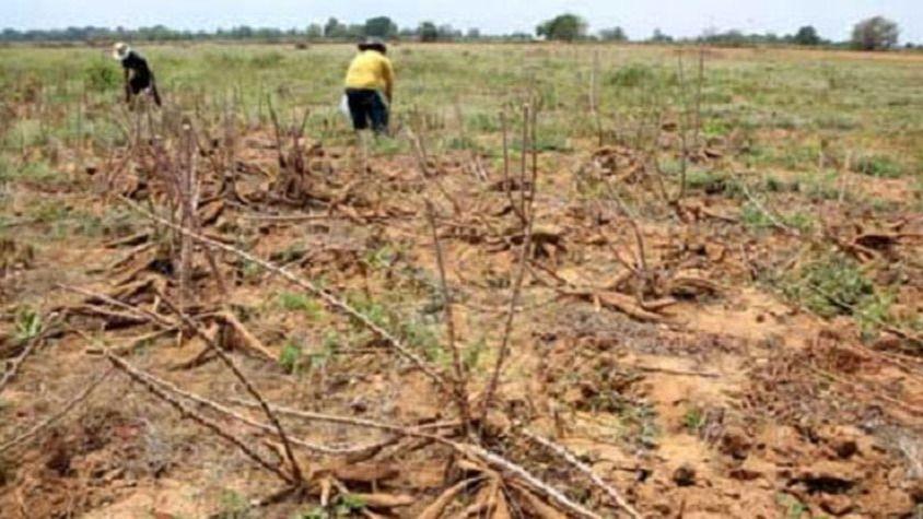 """Fedeagro advierte que """"la agricultura está al borde de un colapso definitivo"""" / Foto: WC"""