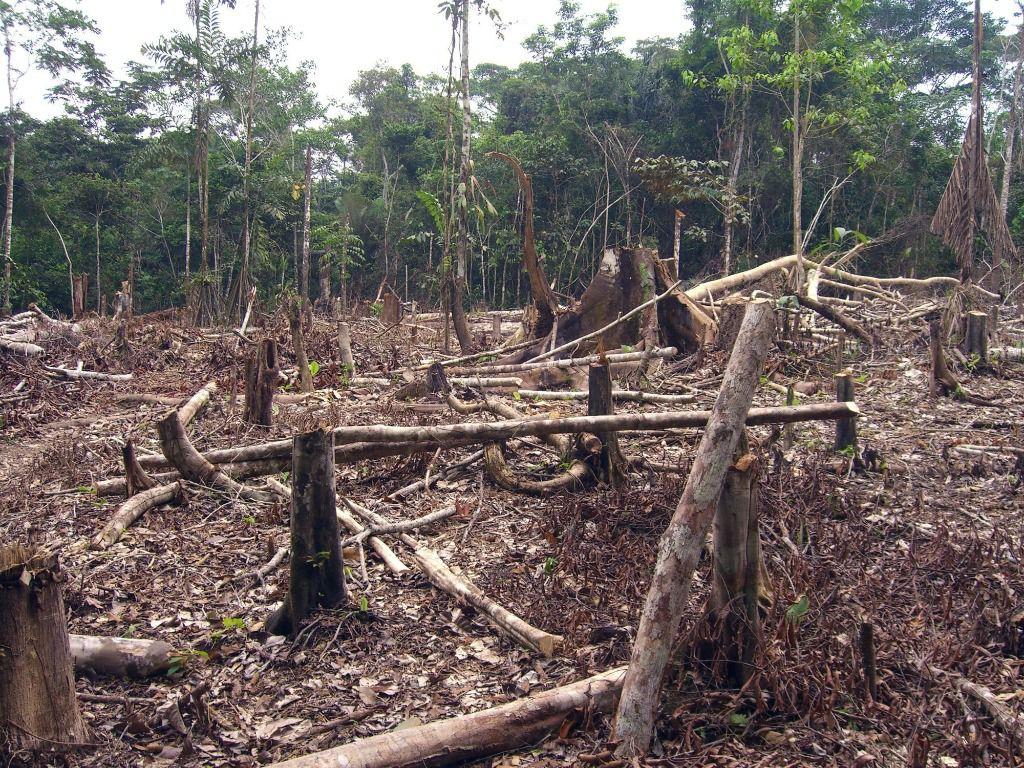 La deforestación de la Amazonia avanza a una velocidad vertiginosa / Foto: WC