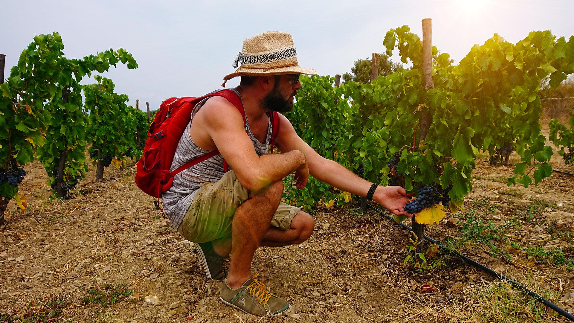Pablo Quiroga va de país en país escudriñando viñas y sabores orgánicos / Foto: Cortesía