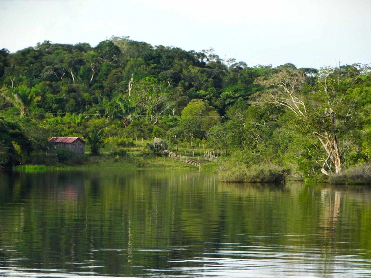 En Suramérica el coronavirus está a la baja menos en el Amazonas / Foto: Pixabay